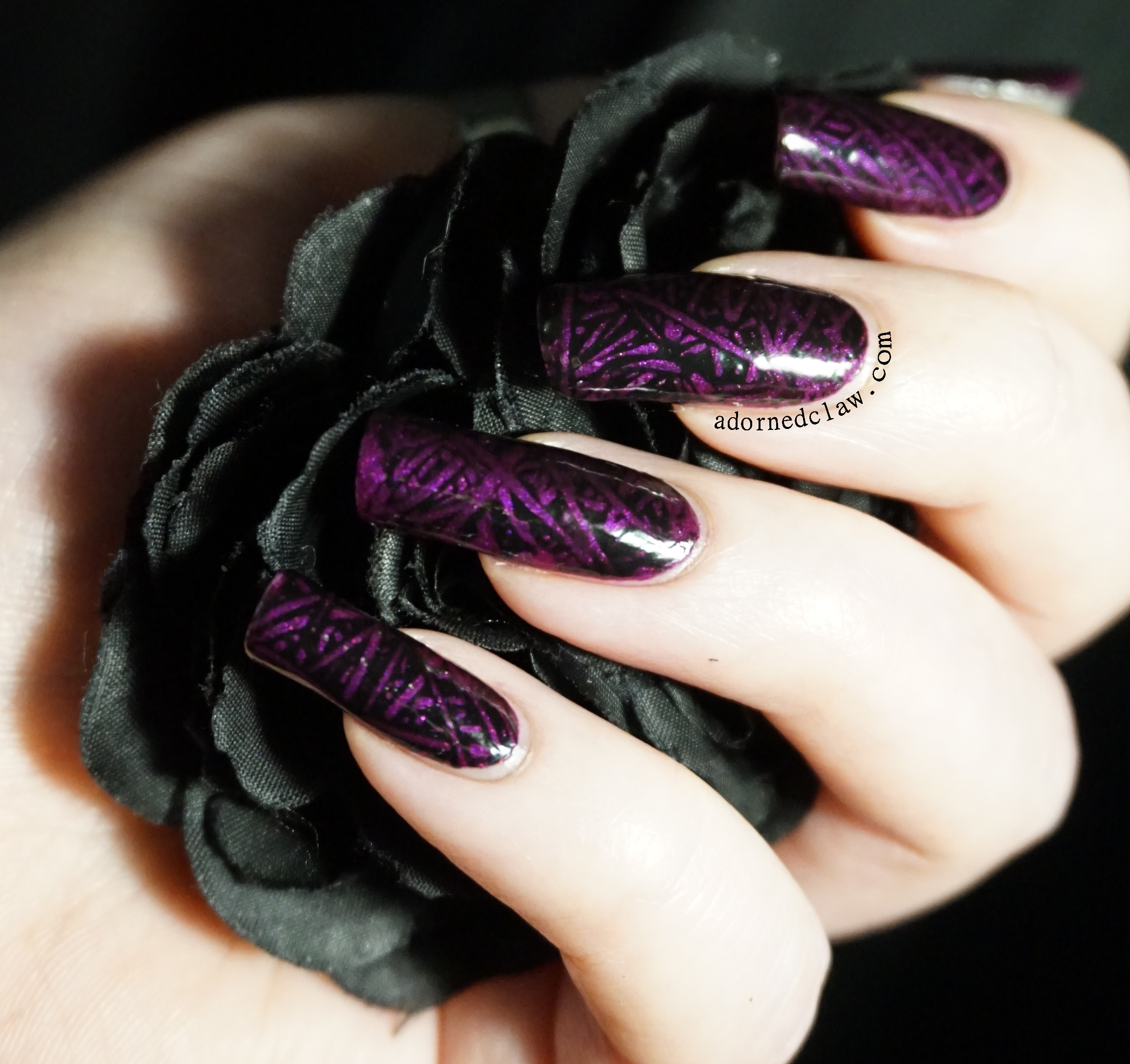 Black The Adorned Claw
